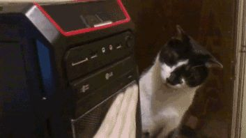 Cat is scared of dvd player