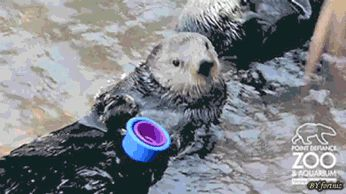 Nellie the otter stacking cups angrily