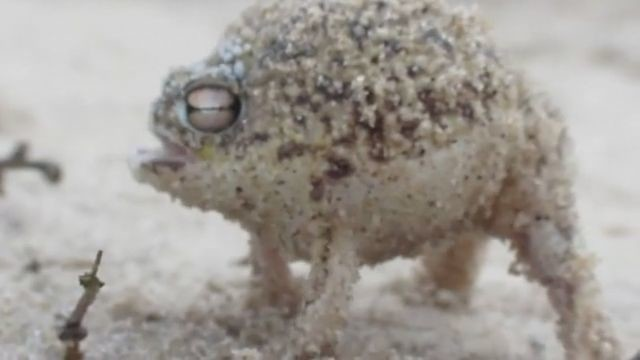 goseegoat beeping cute frog