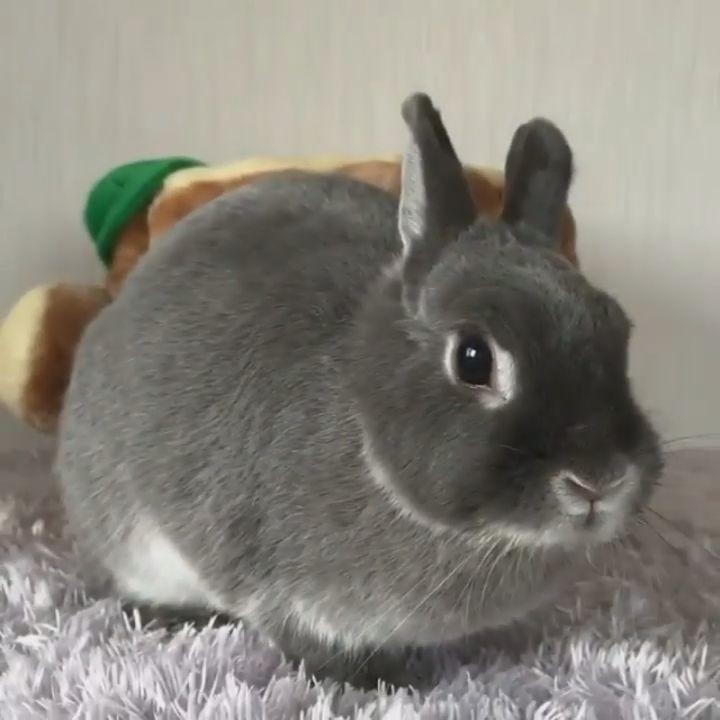 goseegoat.com funny cute bunny video (8)