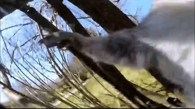 goseegoat.com funny cute squirrel video (8)
