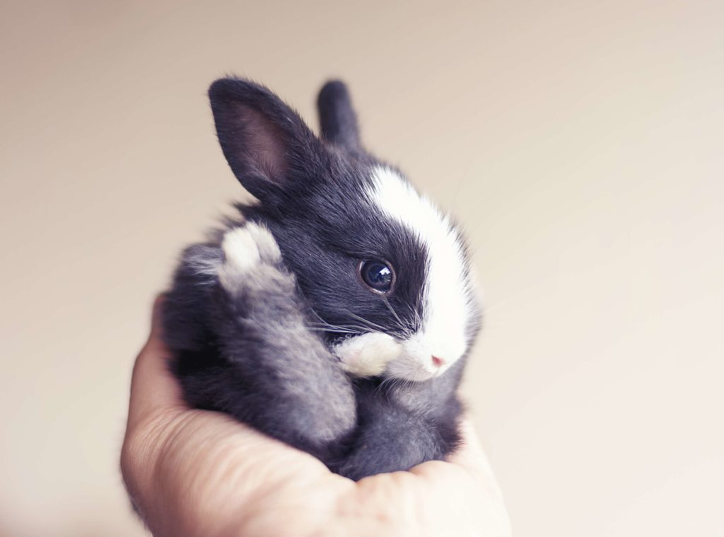 Small bunny rolled up fits in hand
