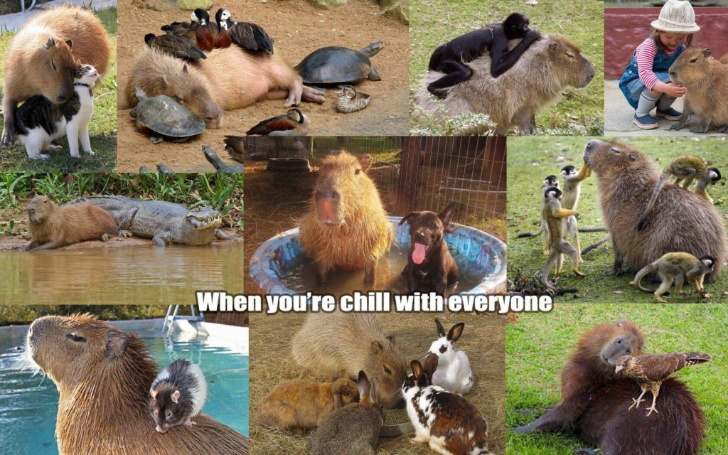 Capybara whne you're chill with everyone