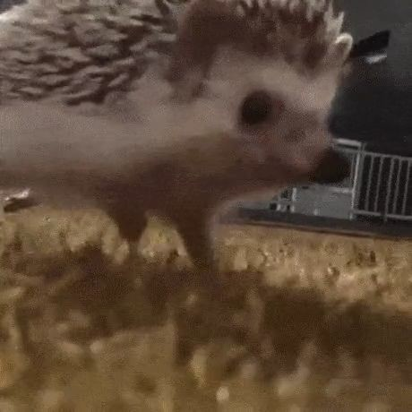 hedgehog fast slowmotion