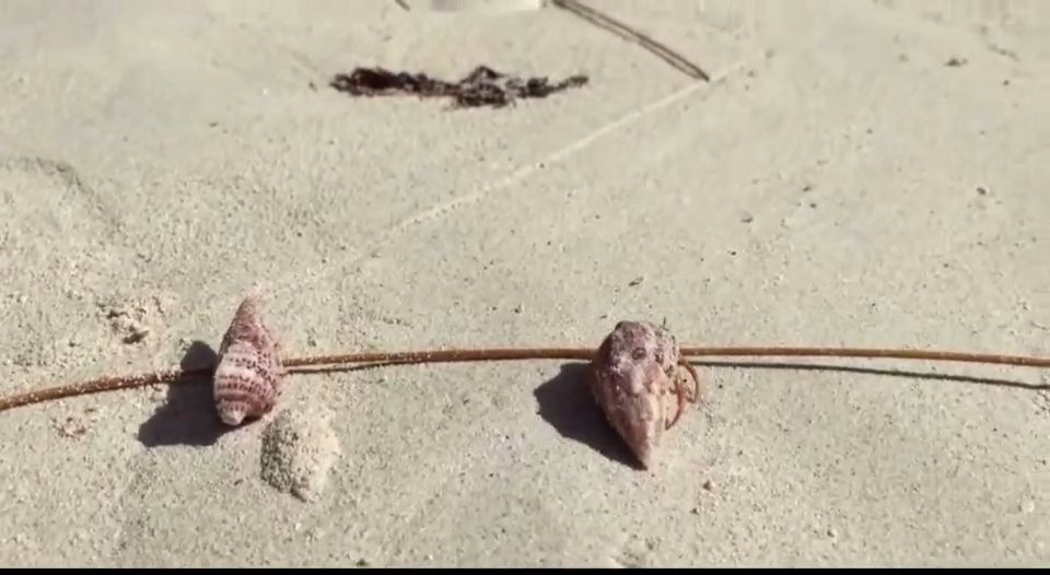 hermit crab shell selection
