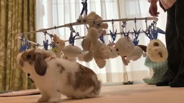 cute bunny chase