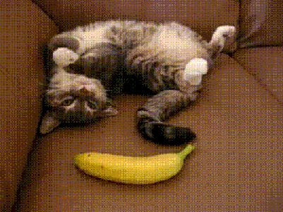 Banana gives cat fright