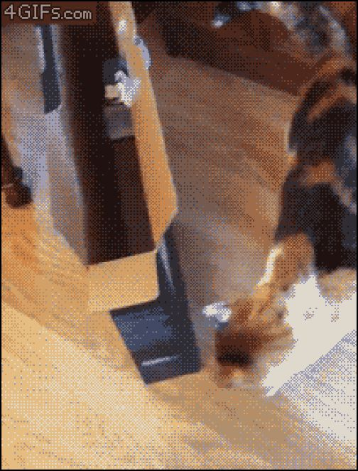 Cat jumps in a bag and gets stuck funny