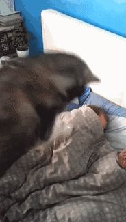 Dog gently wakes up her owner