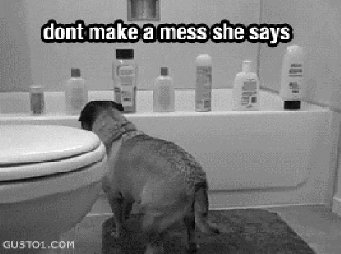 Sassy dog knocks over shampoo