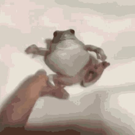 Someone poking a frog thats trying to relax animated gif