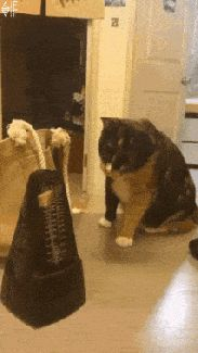 automatic cat poker