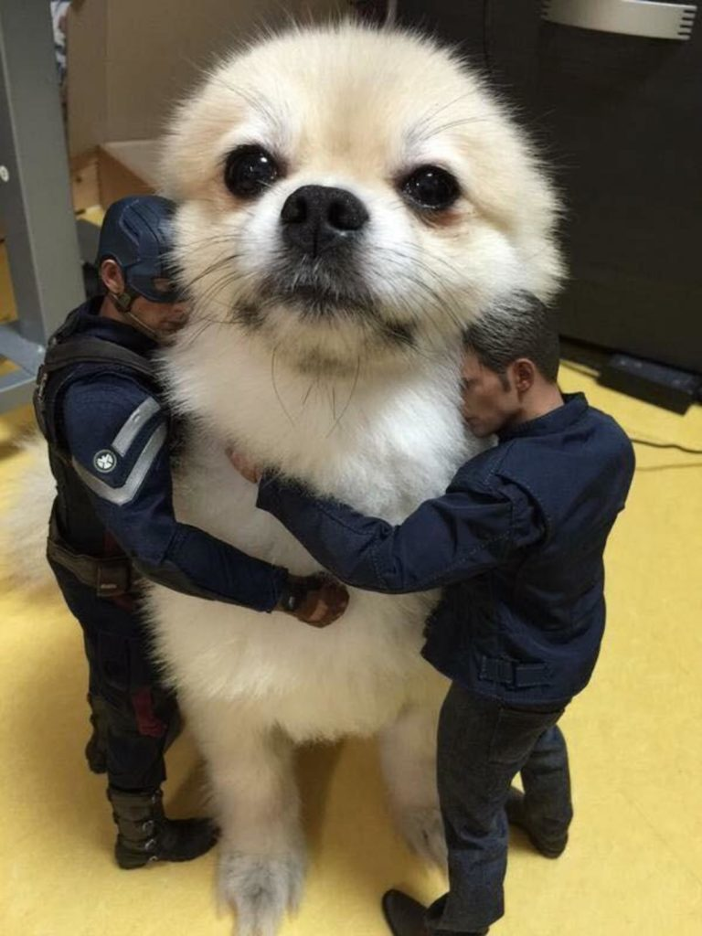 Avengers: Dog being hugged by Captain America figurine