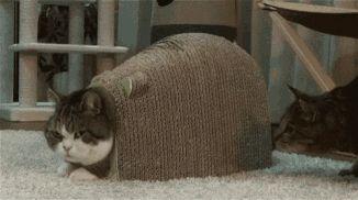 Cat gets bitten in the ass
