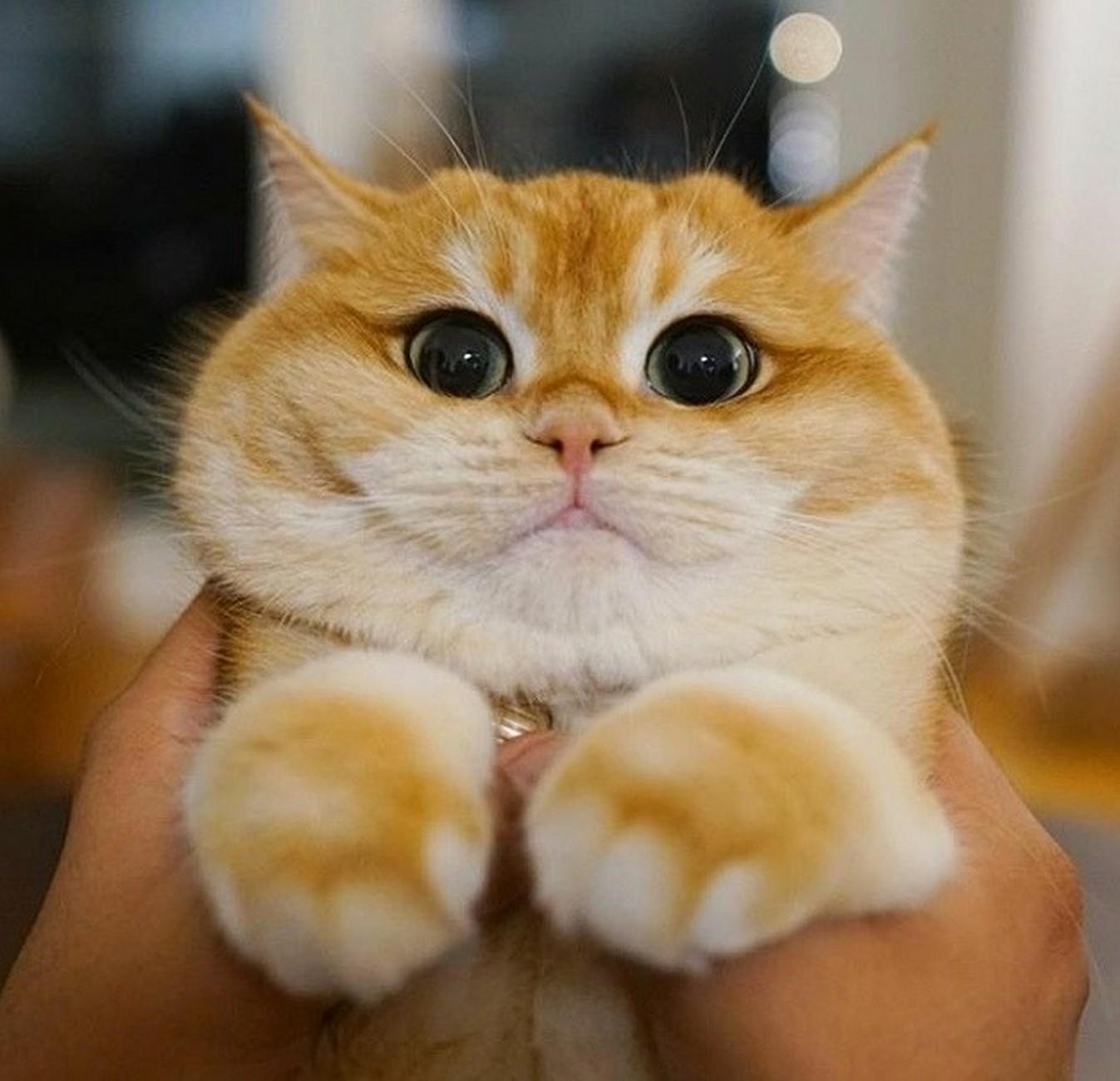 Handsome cat looks good