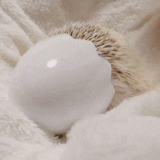 Hedgehog in a egg