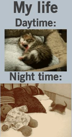 My life daytime and night time explained through cat gifs