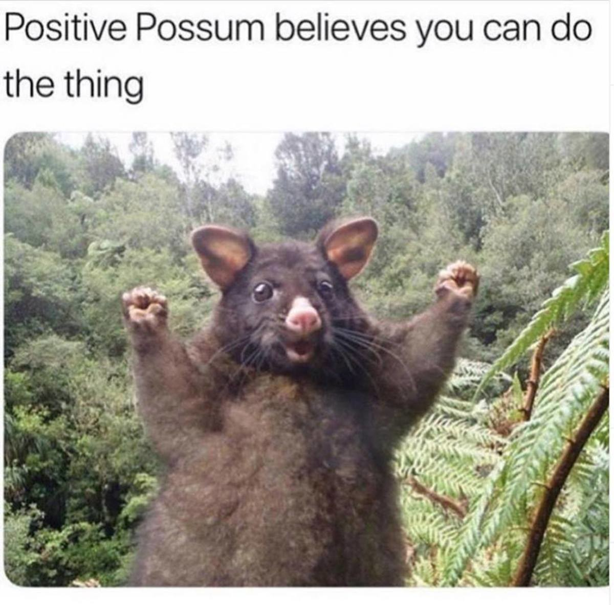 Positive Possum believes you can do the thing