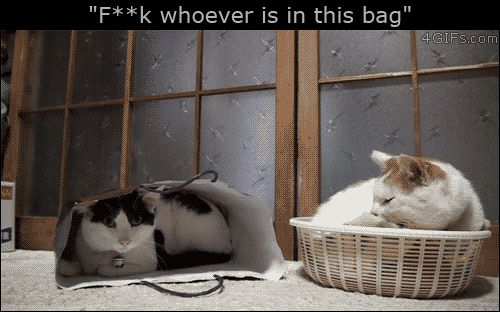 Funny and cruel cat slaps bag cat - Fuck whoever is in this bag