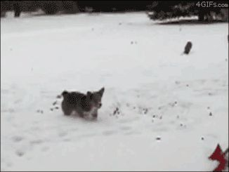 Dog does a backflip while trying to catch snow
