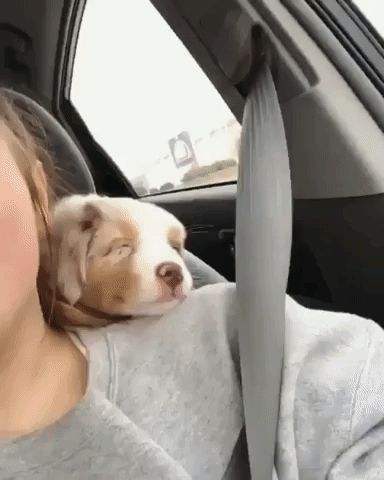 Happy puppy car ride