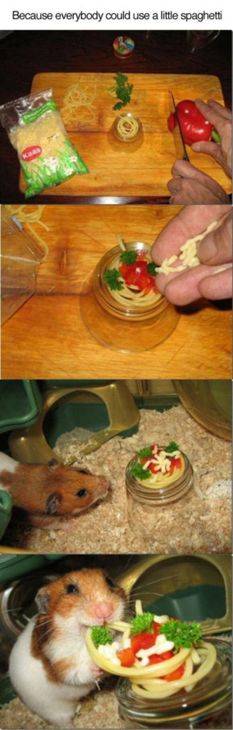 Tiny hamsters spaghetti dinner